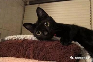 铲屎官泄露出一系列的猫咪崩坏照,网友笑翻:主子已经去拿刀的路上了