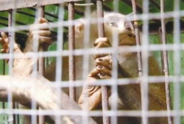 """变""""省里人""""了!儿童公园越狱伤人的猕猴,被送到杭州了!"""