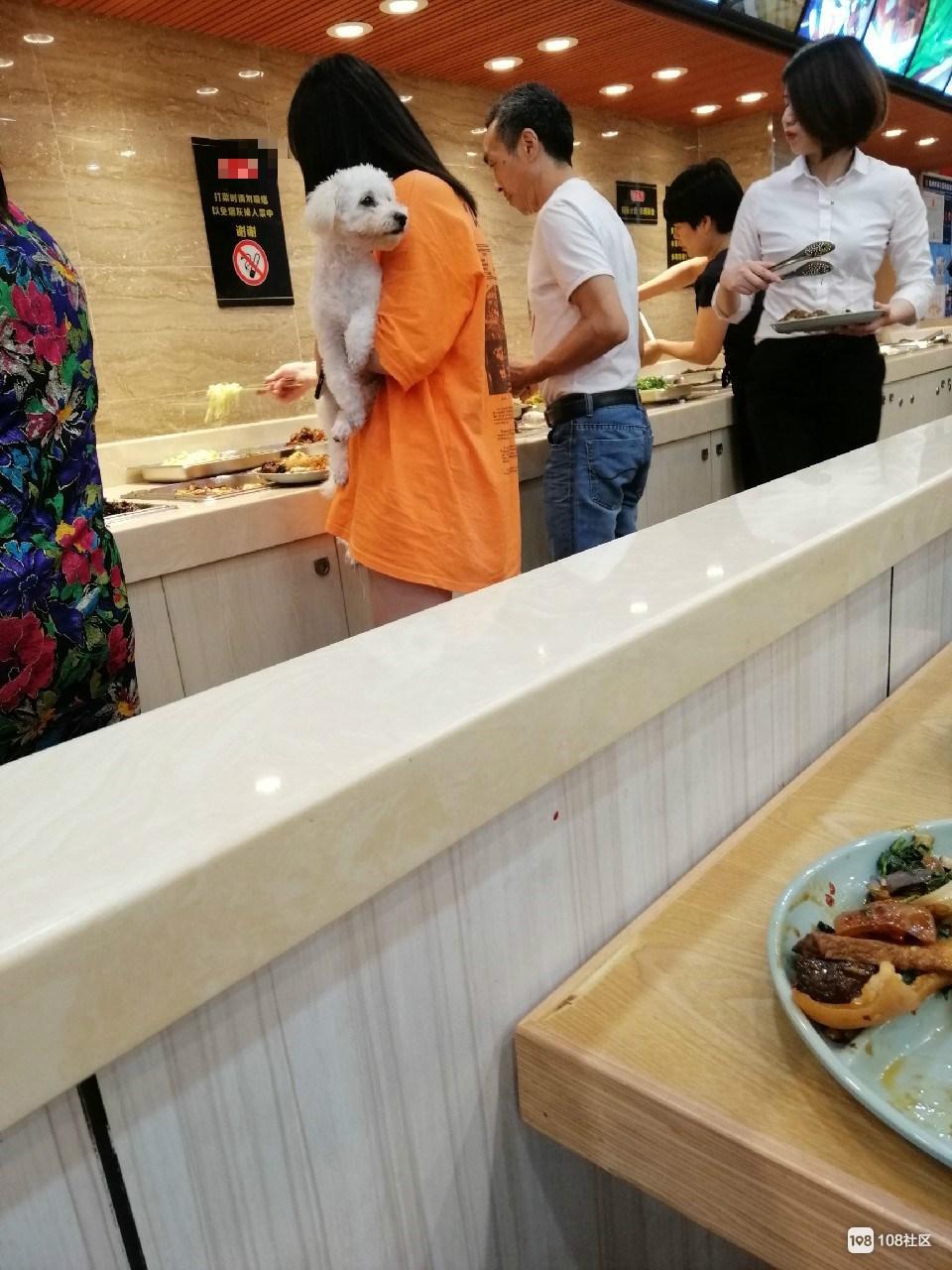 一美女抱着狗进餐厅,还来回走了五趟,毛都掉菜里了!