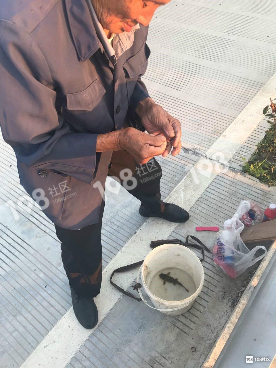 棒棒哒!91岁老人每天坚持钓鱼,这毅力让人佩服!