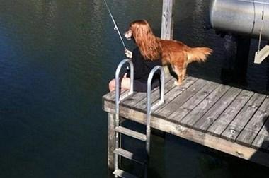 匪夷所思的狗狗照片