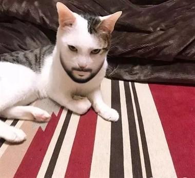 当你看到这只猫,会有一种你怎么帅成这样的感觉!