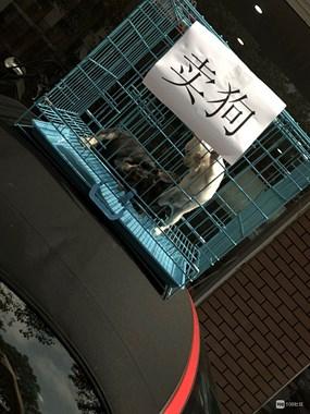 惊掉下巴!绍兴街头一保时捷车顶放了个狗笼,还写着2个大字