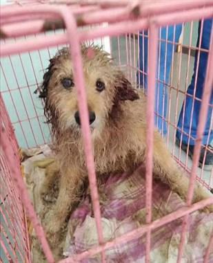 """狗狗为了""""回家"""",每天吃着垃圾,然而迎接它却是疯狂的撕咬..."""