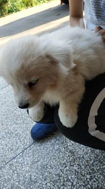 【转卖】小狗