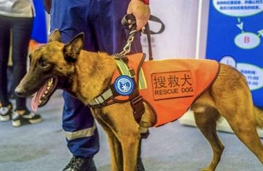 地震来了!那些怕狗的人一定要躲好,别吭声!因为......