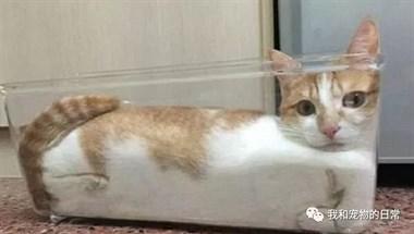 任意形状液体猫,最后一个真是绝了!