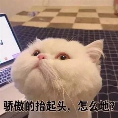 比绝望更绝望的是,摊上一只不埋屎的猫!