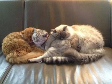 睡在各个地方的喵星人,实在是太可爱了