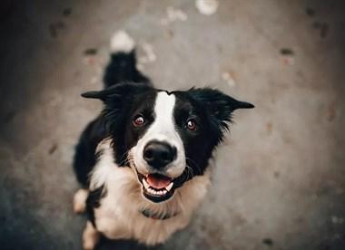 一问课堂 | 养犬之前我们需要知道什么?