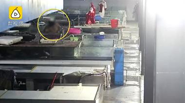 男子进菜市场砍死20多条鱼:心情不好,想发泄