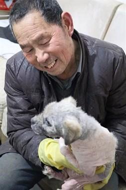 """""""救救它们吧!""""7旬孤寡老人抱着狗狗求人模样,让人心酸动容!"""