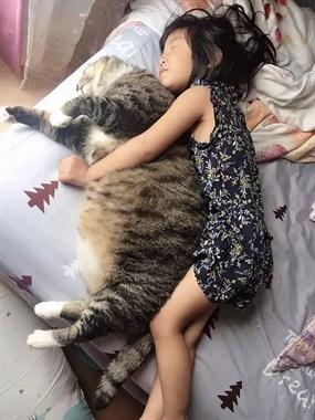 这只猫咪努力减肥半年后,效果让猫头大。