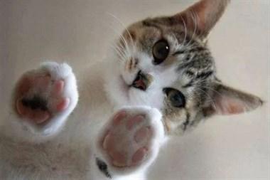 从玻璃下边观察猫星人是怎么样的感受呢