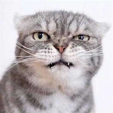 看了这只猫的眼睛,我想跪下来喊大哥。