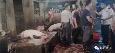 景德镇这些屠宰场猪肉竟不合格!15头生猪被收缴!