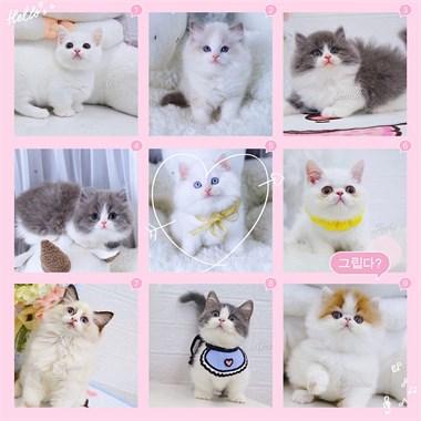 各品种萌猫宝宝出售