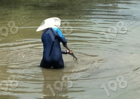 自家在上游造房,湖莲潭一美女穿着衣服,下水里做这