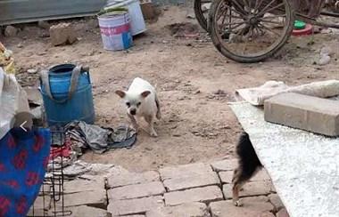 被丢弃小狗为了追回主人,遭遇车祸,受伤后忠诚举动让人心酸...