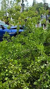 """海宁一公路上演""""飞车""""大片!3颗树被连根拔起,现场狼藉"""