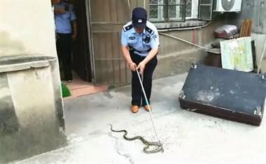 吓死!70岁老太睡梦中被疼醒,竟发现一条蛇在咬自己的脚!