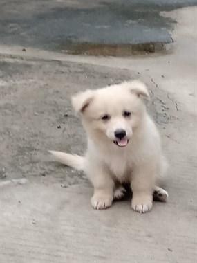 可爱小狗送人
