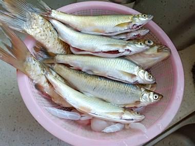 镇巴佬在昌江河边钓上来4斤鱼!一想到钓鱼都睡不着了