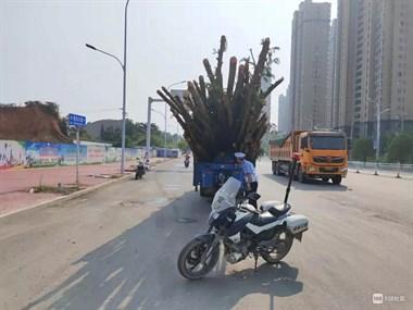 """景东大道一电三轮""""开大炮""""被拦停 司机人都看不见"""