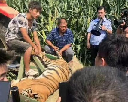 """正在马戏表演的老虎突然""""越狱"""",被抓后送到动物园时死亡"""