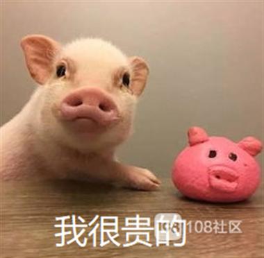 国家发话,养猪最高补助500万!德清人:组团养猪有没有?