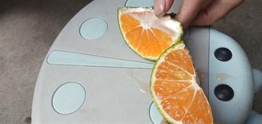 自家本地特早蜜橘倒计时