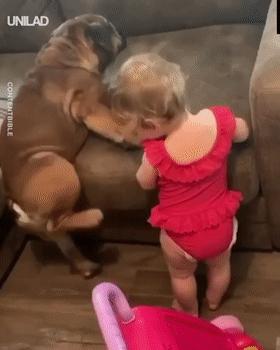 看小主人爬不上沙发,热心狗砸跑来教她,可结果...