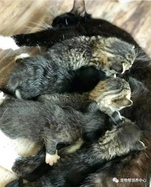 收容所猫咪和志愿者玩耍,不仅偷走了他的心,还偷走了……