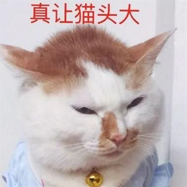 一晚连啪5只母猫,累到医院打点滴,这只中国猫让全世界懵逼了
