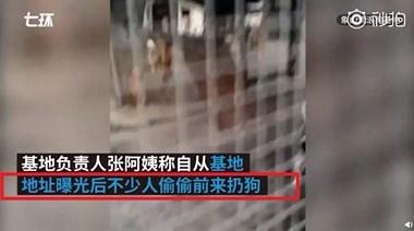 12只奶狗被丢救助站门口,遗弃宠物应该入刑了!
