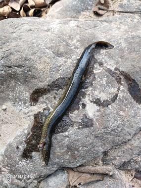 想钓石斑没钓到钓到个这东西,身体长长的像条小泥鳅