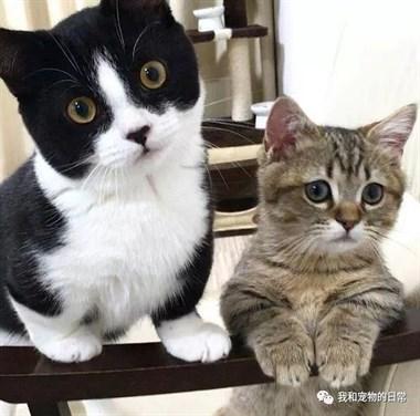 这对小短腿猫猫,光看它们走路就可以看一天,太治愈了!