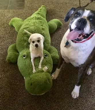 每只狗都有一个自己最爱的玩具