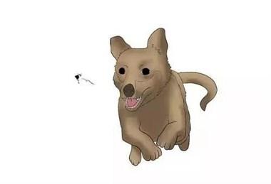 """狗狗为啥总是对着""""空气""""乱叫?"""