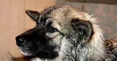 宠物狗带迷路的三岁小主人野外流浪,最后终于等来了救援人员…