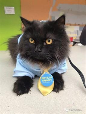 养猫能治病!大黑猫不仅拥有让人羡慕的工作,还出差7个国家……