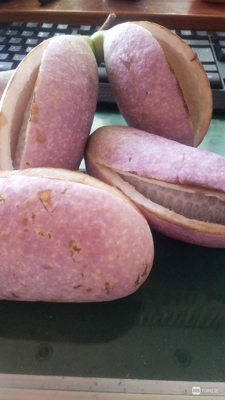 婆婆带回了几个裂开的瓜,外表紫红色,你见过吗?
