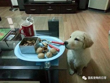 你家宠物捡过啥奇怪的东西回家?最后一张震惊了