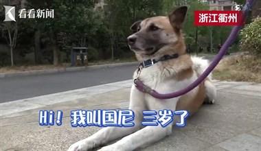 衢州这只土狗成精了,被人民网点赞还上了电视!
