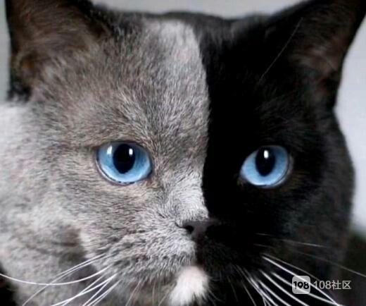 【不看不睡觉】肚子都笑痛了!这些猫长得太有趣了吧