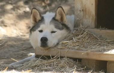 事实证明,狗狗的下巴几乎可以放到任何东西上面