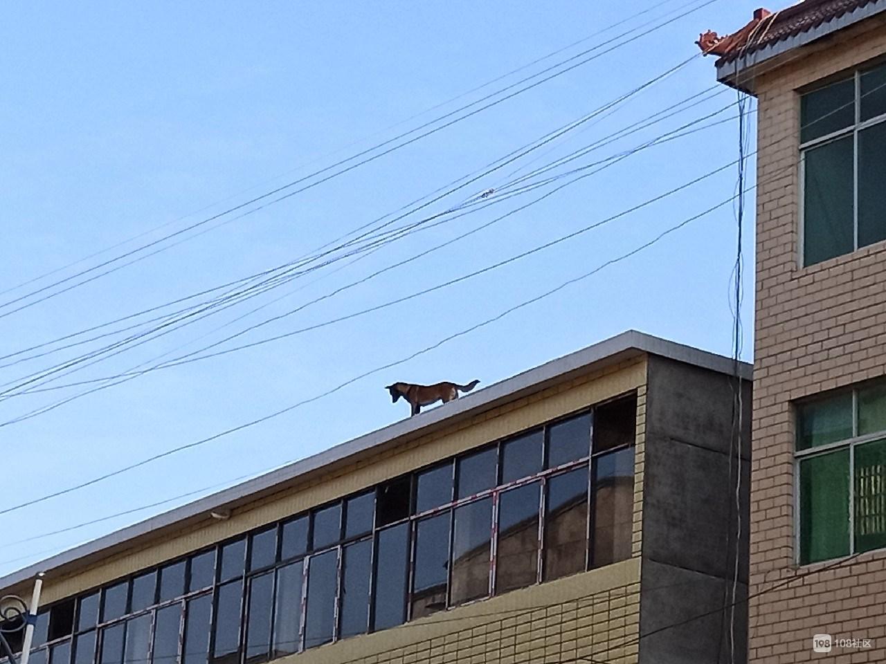 要破财还是好运来?镇巴佬看到只狗上了房顶 还对视了几秒