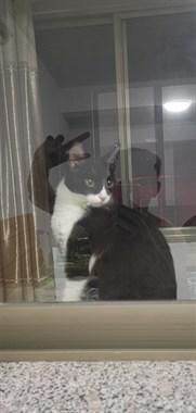 【转卖】宠物猫
