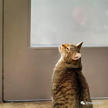 自从这只猫来了,收容所再无宁日,因为它会这个神技…