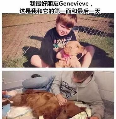 她哭着带宠物去安乐死:我爱你,却救不了你。